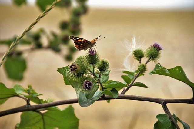v přírodě funguje podobně jako suchý zip i například bodlák